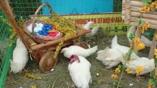 Выставка сельскохозяйственных животных Exhibition of farm animals