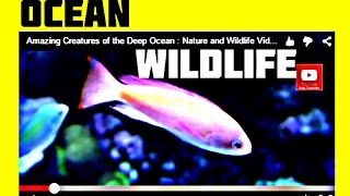 Amazing Creatures of the Deep Ocean : Nature and Wildlife Video