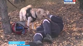 Аттестация собак поисковых формирований МЧС