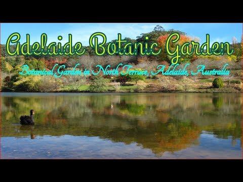 Visiting Adelaide Botanic Garden, Botanical Garden in North Terrace, Adelaide 5000, Australia 2017