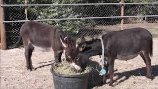 Donkey Needs