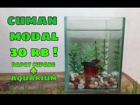 Aquarium Ikan Cupang Minimalis Youtube