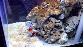 Adding Fish To My 60 Gallon Reef Tank