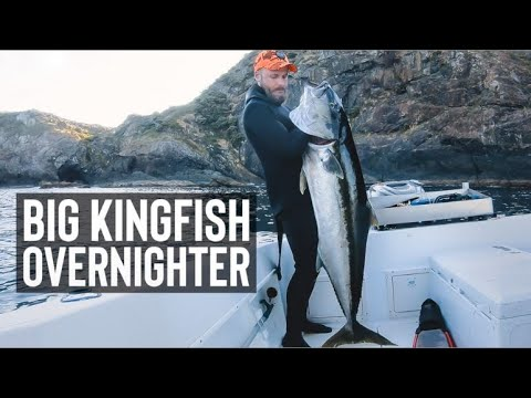 Overnight Spearfishing For BIG YELLOWTAIL KINGFISH In New Zealand + CRAYFISH CATCH & COOK