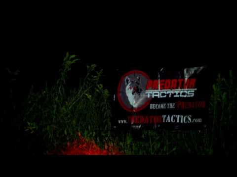 Coyote hunting with PREDATOR TACTICS lights