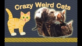 Crazy Weird CATS will BLOW your Mind! (2019)