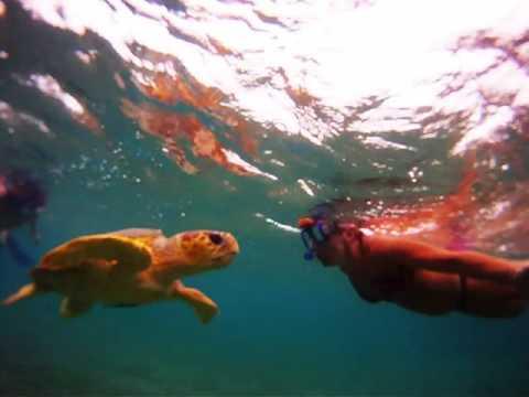 Sea turtle attack - Placencia, Belize
