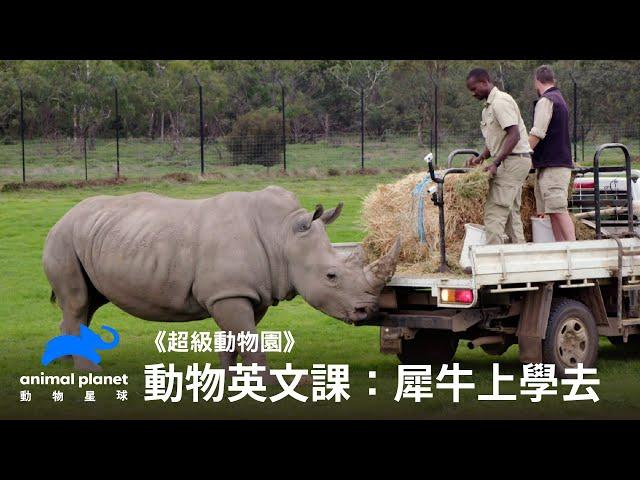 【中英雙字幕】動物線上英文課:犀牛上學去 動物星球頻道