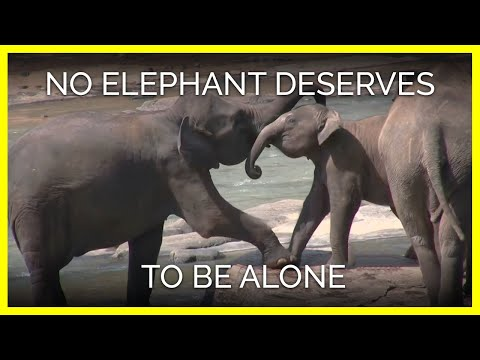 No Elephant Deserves to Be Alone