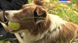 В Костроме собаки МЧС сдают экзамены на профпригодность