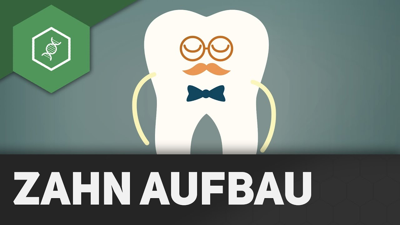 Zahn-Aufbau - YouTube