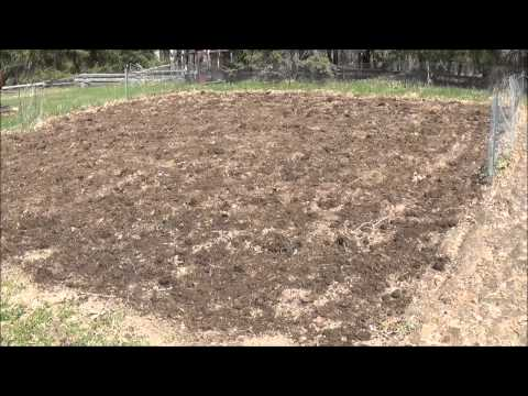 The Hobby Farm. Meat Rabbits and Breeding (graphic). This Years Plan.