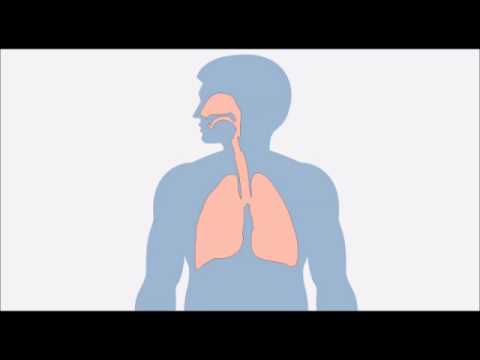bronchite aigu� mucus sanglant crachats sanglants