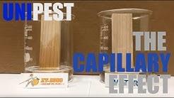 How Orange Oil Kills Termites with the Capillary Effect Santa Clarita Termite Control Series