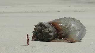 FAMILY DISCOVERS GIANT JELLYFISH ON BEACH VACATION