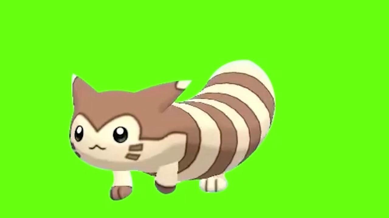 (Fixed) Furret Walk 60FPS Green Screen - YouTube