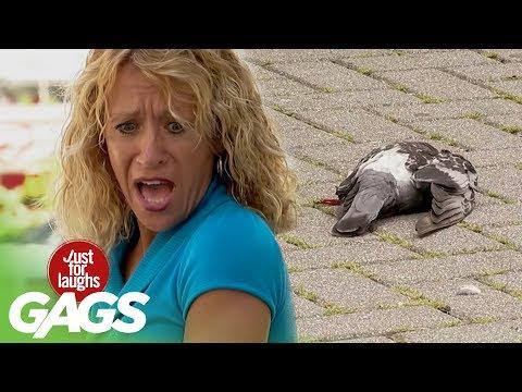 Raging BULL Wants Caffeine, Spraying Water on Cop, Golfer Hits Pigeon Prank
