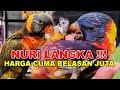 Nuri Langka Harga Cuma Belasan Juta  Mp3 - Mp4 Download