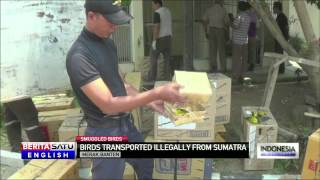 Police Arrest Truck Driver in Indonesia Bird Smuggling Case