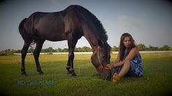 Horse Care, Basic Horse training by Village girl