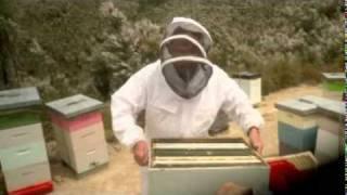 Manuka Honey Production