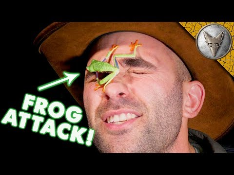 SURPRISE FROG ATTACK!