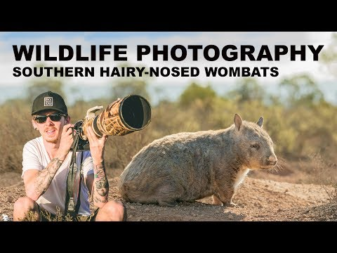 ENDANGERED WOMBATS - WILDLIFE PHOTOGRAPHY | BEHIND THE SCENES Part 1