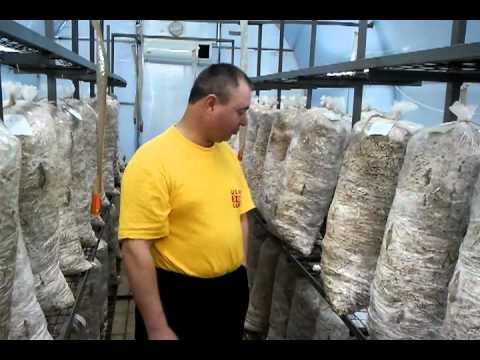 Способы недорогой обшивки неотапливаемой веранды - нюансы