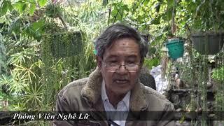 Việt Kiều Về Quê Ăn Tết- Vui Hay Nhục