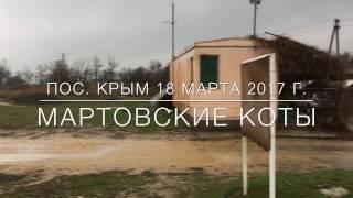 Ростов-на-Дону. Мартовские коты. Матч IPSC. Карабин.