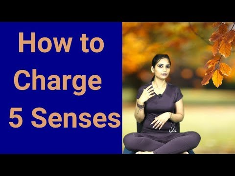 how-to-charge-5-senses-l-best-psychologist-in-meerut-l-dr-kashika-jain