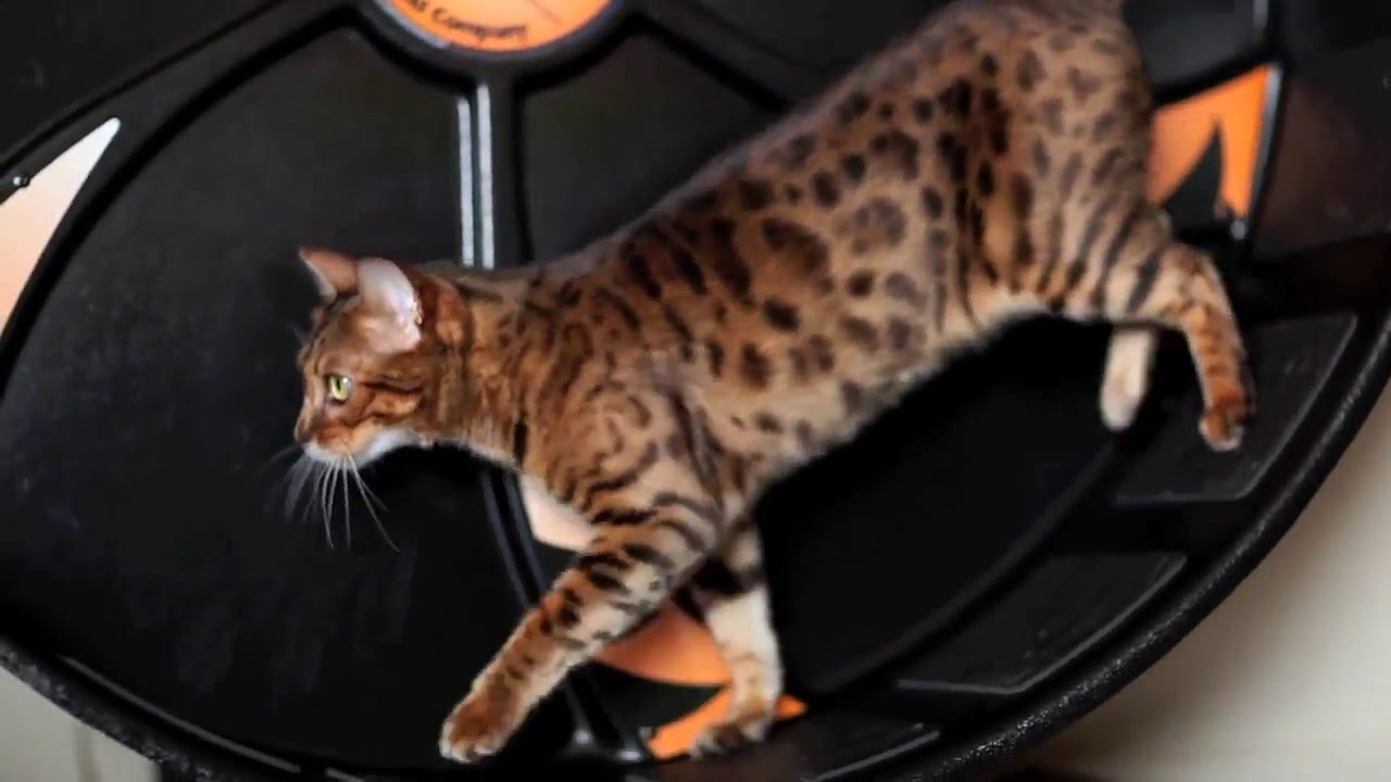 best flea and tick prevention for cats 2014