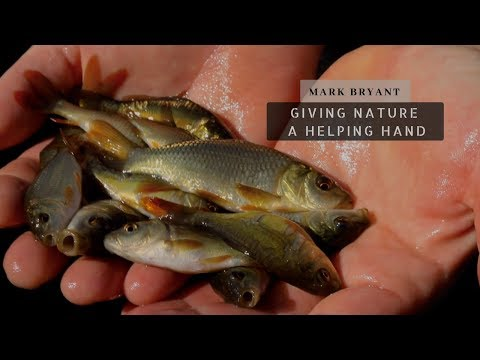 Carp Fishing - Growing Baby Carp - Giving Nature A Helping Hand