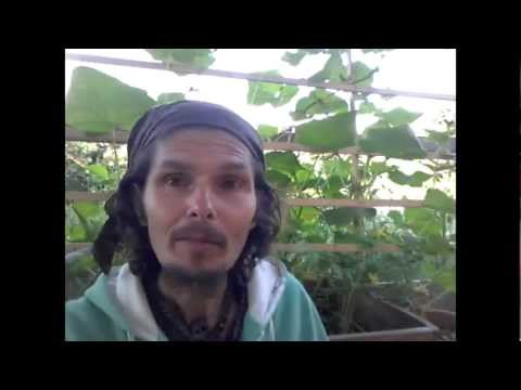 Astragale Telomerase : Promotions - Plante - Posologie | Comment faire une cure ?