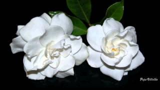 Dos Gardenias - Bolero - Karaoke Version