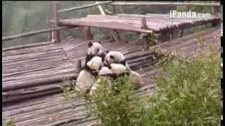 Panda-Mother of mine[2]3/10/14