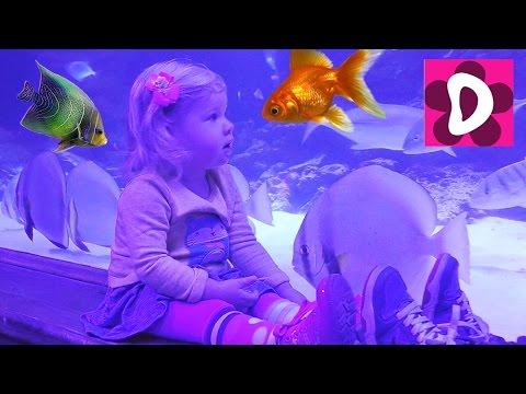 ✿ VLOG Идем в Океанариум Пираньи Акулы Рыба-Собака от Диана Шоу Light-up Aquarium Review and Play