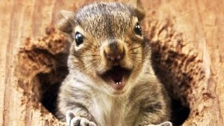 FUNNY SQUIRRELS ★ TOO CUTE! [Funny Pets]