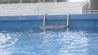 Trip to Miami-Dolphins swimming around Thumbnail