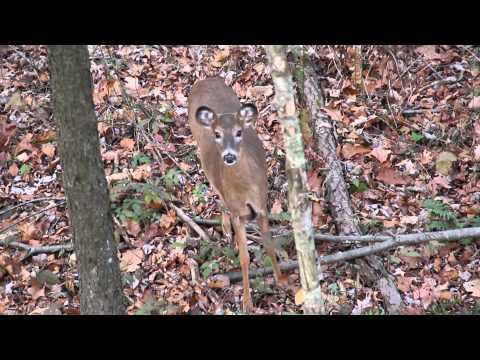 Descendants Outdoors Television - 2014 Season Teaser Clips