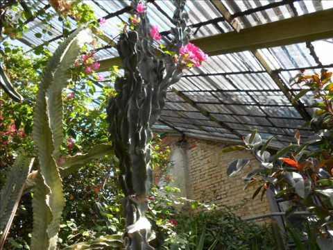 Хризантема шаровидная — красивейший цветущий клумбовый цветок. Многие садоводы предпочитают выращивать хризантему шаровидную так, что у них является настоящим хобби, причем выращивают как декоративно цветущую в открытом грунте, так и на срезку в защищенном. В открытом грунте.