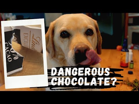 How Much Chocolate Is Toxic To Your Dog?