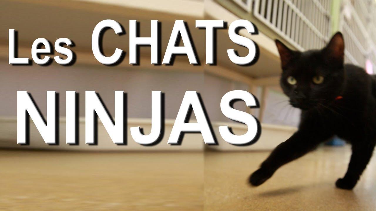 Les Chats Ninja  Parole De Chat  Youtube