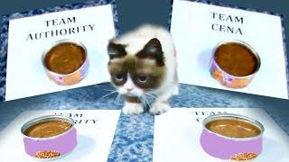 Grumpy Cat predicts winner of Team Cena vs. Team Authority