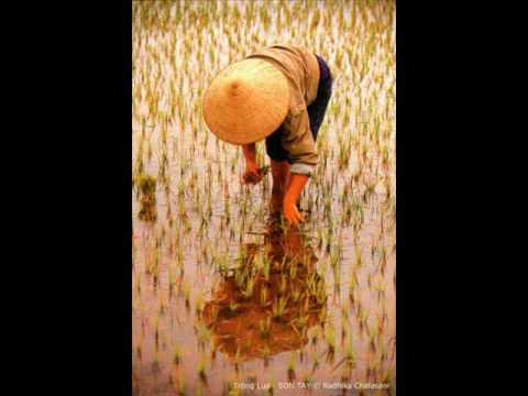 Hạt gạo làng ta