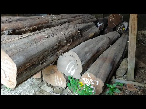 Penggergajian Blandar 4mx12x12 Kayu Jati Perhutani Randublatung Blora#WoodWorking#TeakWood#KayuJati