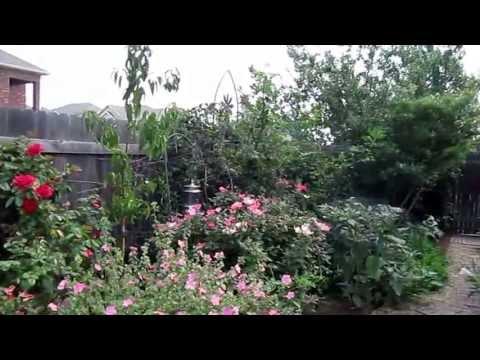 Xeriscape Plants in the landscape, designer Lisa LaPaso (Avery Ranch Garden Tour)