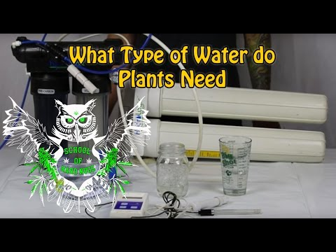 What Type of Water do Weed Plants Need | Water filters for your marijuana | Do I need RO water?