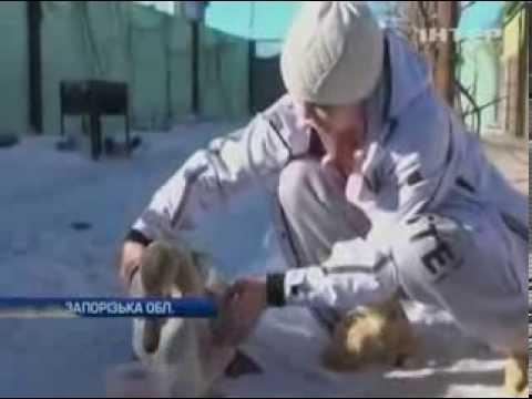 На Запорожье спасли вмерзшего в лед лебедя
