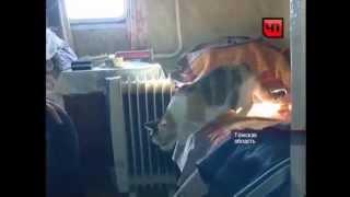 Кошка, выжившая после крушения рейса Томск-Сургут спустя три недели вернулась домой
